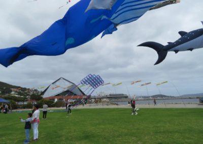 Sunsmart Albany Kite Fiesta 2019 - - Photo by Basil Schur